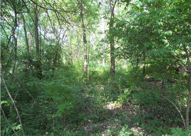 Beautiful Hunting Land For Sale in Pope County Southern Illinois